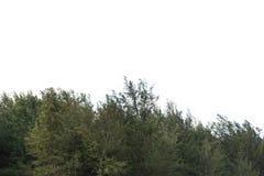 在白色背景的叶子隔离 免版税库存图片