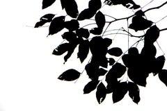 在白色背景的叶子黑剪影 库存图片