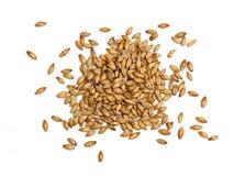 在白色背景的含麦芽的大麦 免版税库存照片