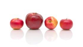 在白色背景的四个红色苹果 库存图片