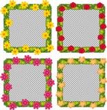 在白色背景的四个花框架 免版税库存照片