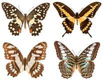 在白色背景的四只蝴蝶 免版税库存照片