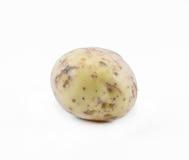在白色背景的土豆-正面图 免版税库存图片