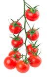 在白色背景的垂悬的蕃茄 免版税库存图片