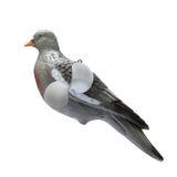 在白色背景的塑料鸽子诱饵孤立 免版税库存图片