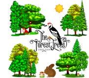 在白色背景的夏天绿色林木 动画片传染媒介集合树在室外公园 库存图片