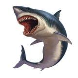 在白色背景的大白鲨鱼