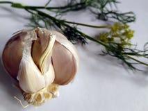在白色背景的大蒜和莳萝照片 库存图片