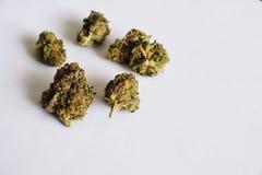 在白色背景的大麻 图库摄影