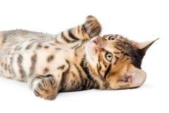 在白色背景的嬉戏的蓬松小猫 免版税库存图片