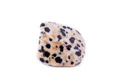 在白色背景的宏观矿物普通角闪石石头 免版税库存照片