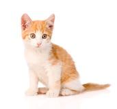 在白色背景的小橙色平纹小猫 免版税库存图片