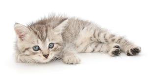 在白色背景的小猫 图库摄影