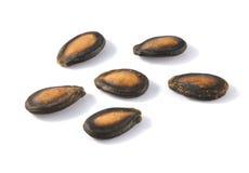 在白色背景的干燥西瓜种子 免版税图库摄影