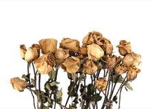 在白色背景的干玫瑰 免版税库存照片