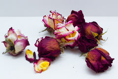 在白色背景的干玫瑰 图库摄影