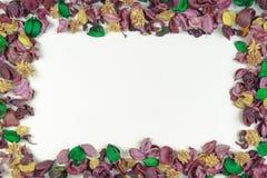 在白色背景的干花和叶子构成框架 顶视图,平的位置 复制文本或图象的空间 库存照片