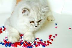 在白色背景的幼小猫 库存照片
