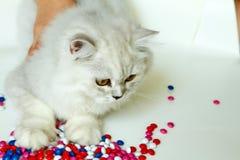 在白色背景的幼小猫 免版税库存图片