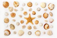在白色背景的异乎寻常的海壳的构成和海星 免版税库存照片