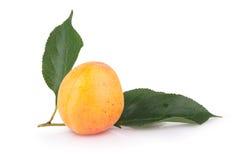 在白色背景的成熟杏子 图库摄影