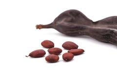在白色背景的成熟角豆树 免版税库存图片