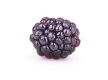 在白色背景的成熟黑莓 图库摄影