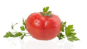 在白色背景的成熟tomatus 库存图片