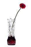 在白色背景的抽象花瓶与一朵红色大丁草花 免版税库存照片