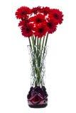 在白色背景的抽象玻璃花瓶与红色大丁草开花 免版税库存照片