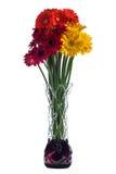 在白色背景的抽象玻璃花瓶与红色大丁草开花 免版税图库摄影