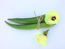 在白色背景的新秋葵果子和花Abelmoschus esculentus秋葵切片 图库摄影