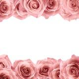 在白色背景的新软的桃红色玫瑰框架 背景看板卡问候页模板通用万维网婚礼 库存照片