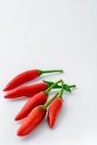 在白色背景的新近地被采摘的辣椒的 免版税库存图片