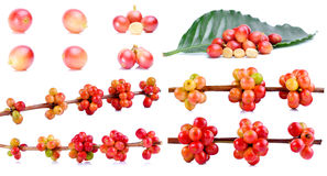 在白色背景的新鲜的咖啡豆 免版税库存图片