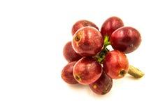 在白色背景的新鲜的成熟红色咖啡豆 免版税库存照片
