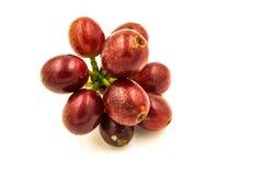 在白色背景的新鲜的成熟红色咖啡豆 图库摄影