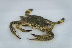 在白色背景的新鲜的未加工的螃蟹海鲜 库存图片