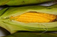 在白色背景的新鲜的玉米棒子 免版税库存照片