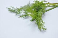 在白色背景的新鲜的莳萝或荷兰芹热带草本 免版税库存图片