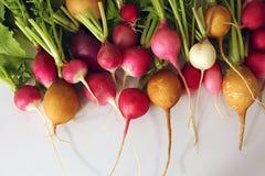 在白色背景的新鲜的萝卜 免版税库存图片