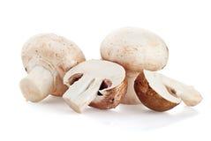 在白色背景的新鲜的蘑菇蘑菇 免版税库存图片