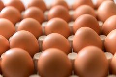 123/5000在白色背景的新鲜的鸡鸡蛋 免版税库存照片