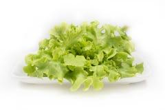 在白色背景的新鲜的绿色橡木莴苣沙拉 免版税库存照片