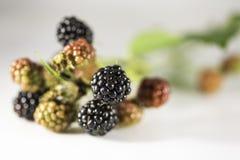在白色背景的新鲜的黑莓 库存照片