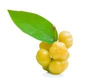 在白色背景的星鹅莓 库存图片