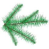 在白色背景的枝杈树 免版税库存照片