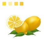 在白色背景的柠檬例证 免版税库存图片