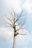 在白色背景的树自然 库存图片