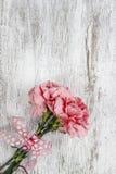 在白色背景的桃红色康乃馨花 免版税库存照片